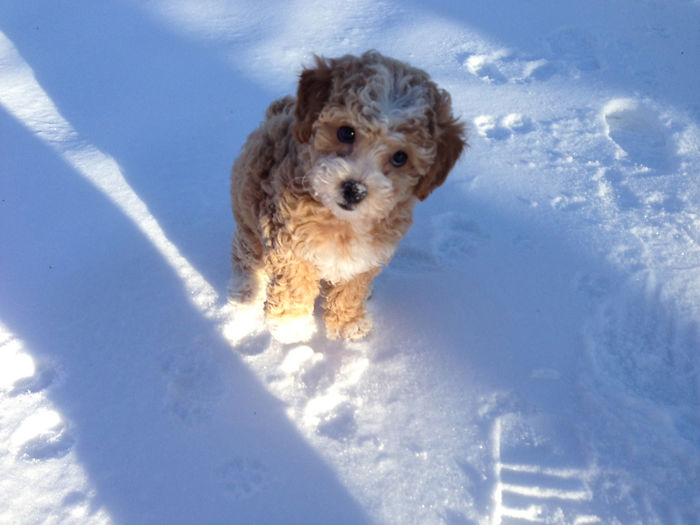 Daisy's First Snow Day