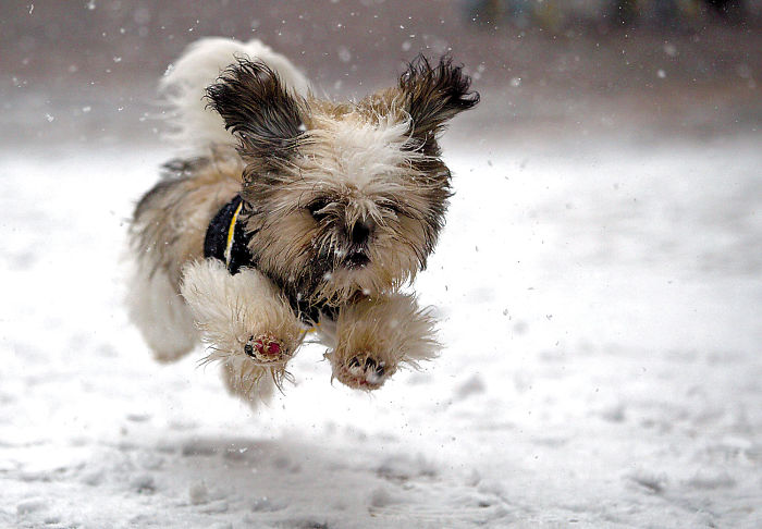 Guido The Blind Puppy Runs In Snow For The First Time
