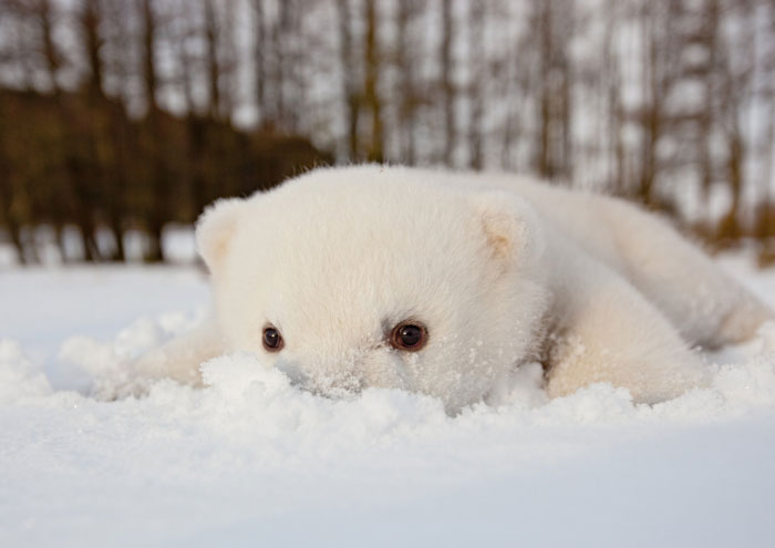 15+ Animals Playing In Snow For The First Time