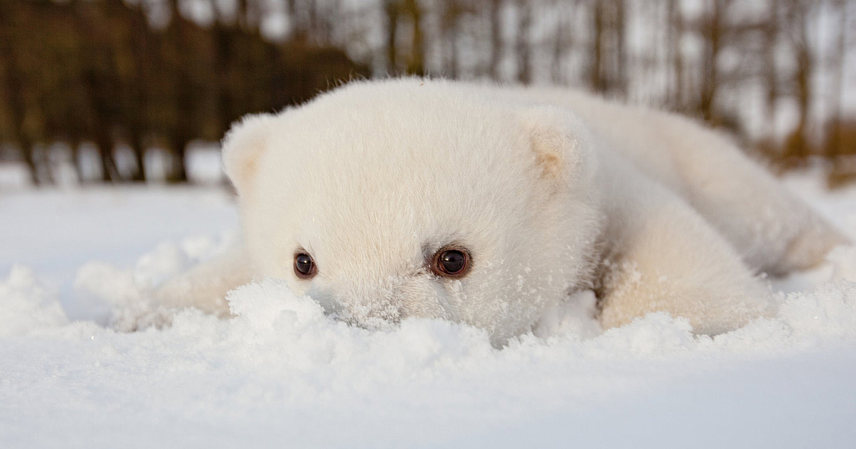 76 Animals Playing In Snow For The First Time