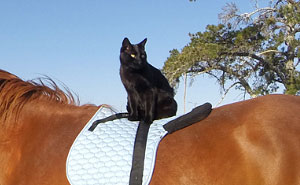 My Cat Morris Loves To Go Horse Riding!