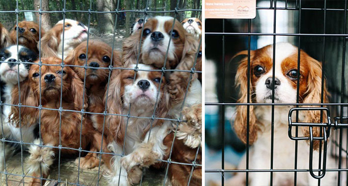 Volunteers Rescue 108 Abused Dogs From Breeding Farm