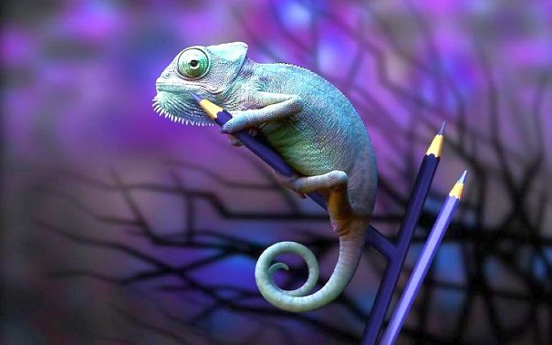 Amazing Chameleon