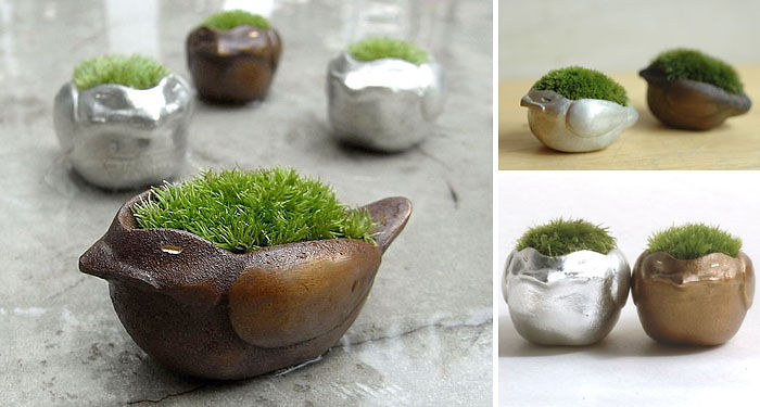 Mossy Accents