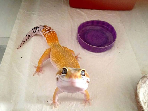 Happy Gecko