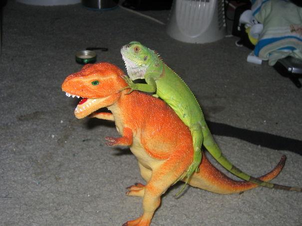 Iguana Riding Its Mighty Steed