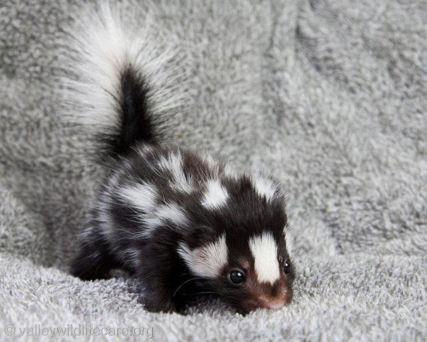 10+ Of The Cutest Baby Animals Of All Time | Bored Panda