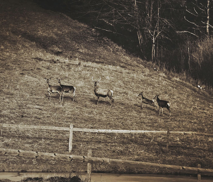 Deer Christmas: My Landscape Photography From Polish Countryside