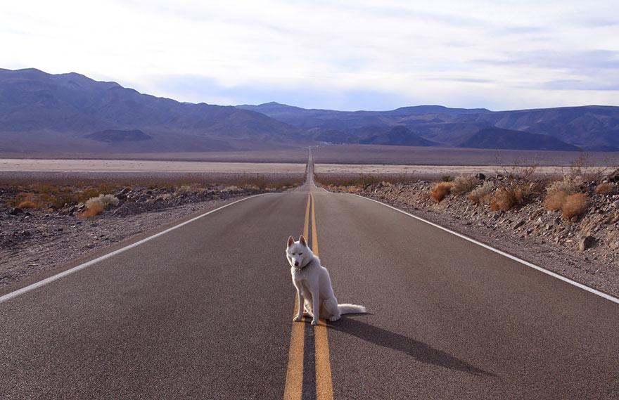 dog-adventures-john-stortz-12