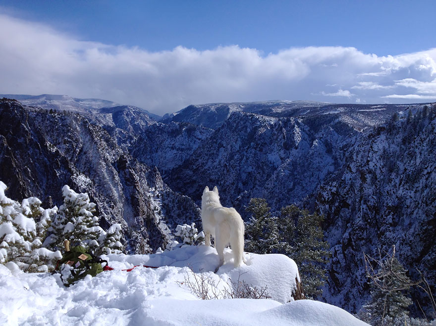 Wild Adventures Of A Man And His Dog In Majestic Nature