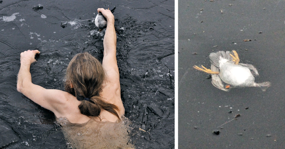 Norwegian Guy Plunges Into Frozen Lake To Rescue Drowning Duck