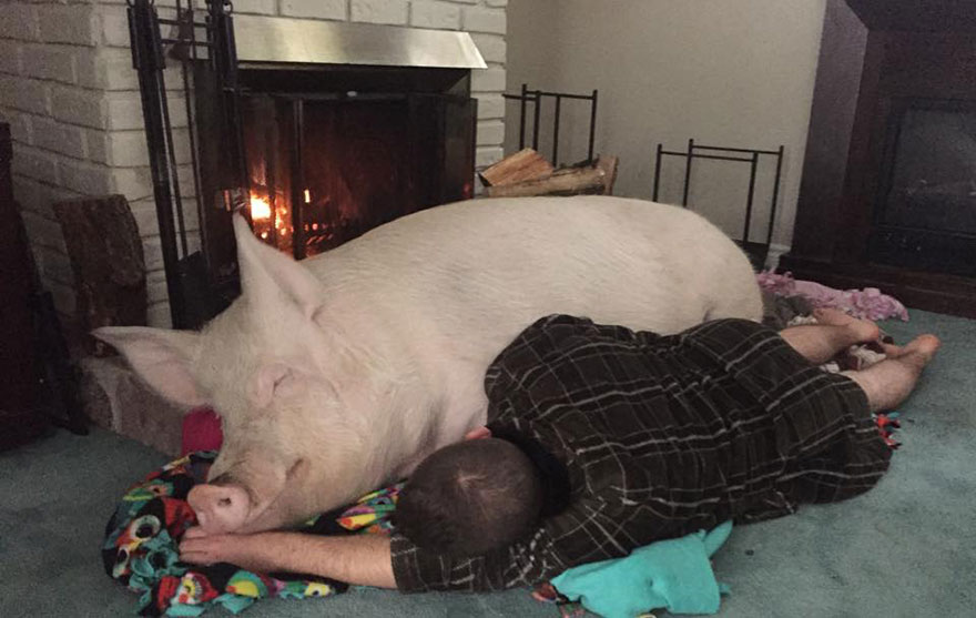 esther-wonder-pig-sanctuary-steve-derek-21
