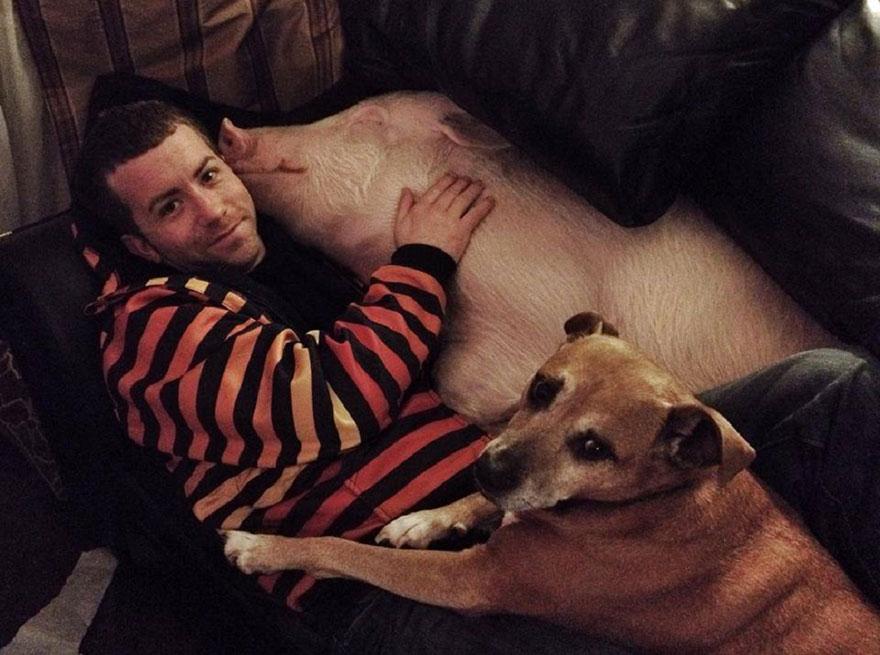 esther-wonder-pig-sanctuary-steve-derek-43