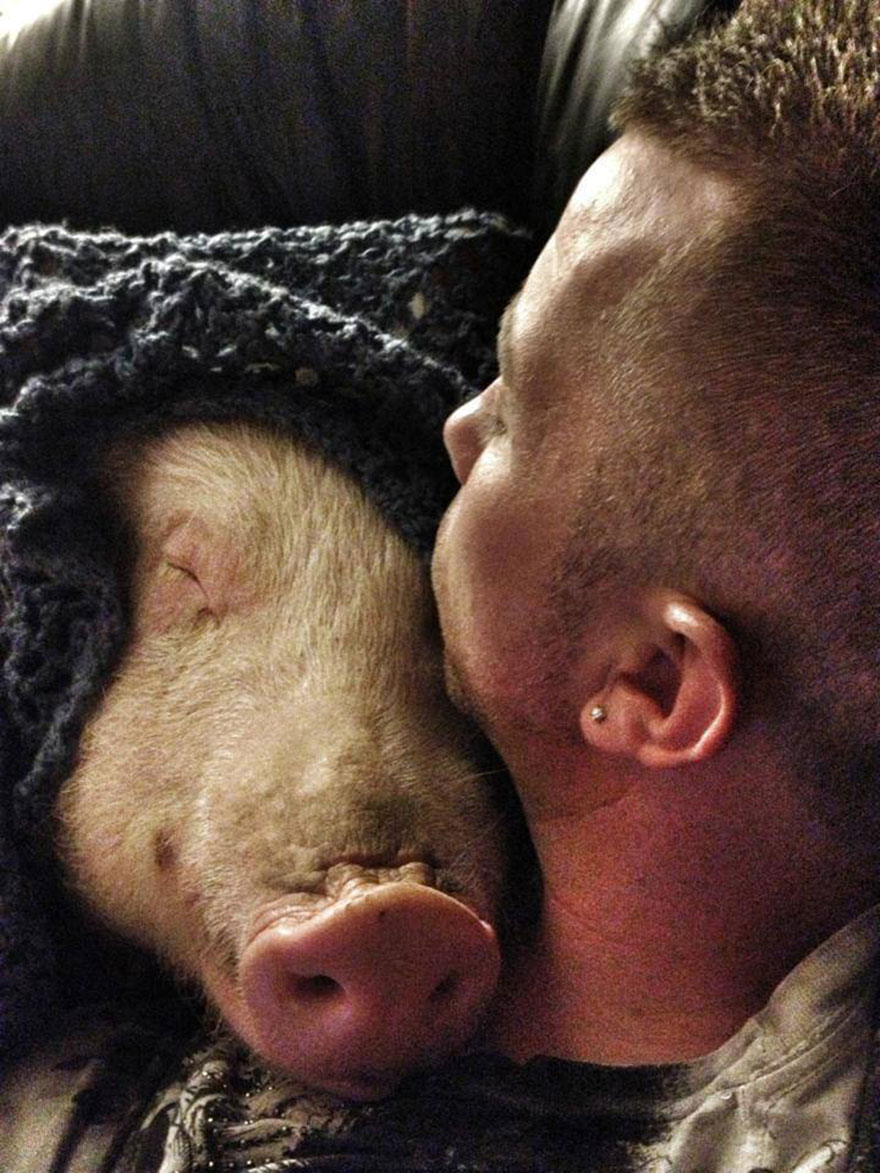 esther-wonder-pig-sanctuary-steve-derek-45