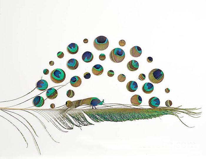 feather-art-chris-maynard-9