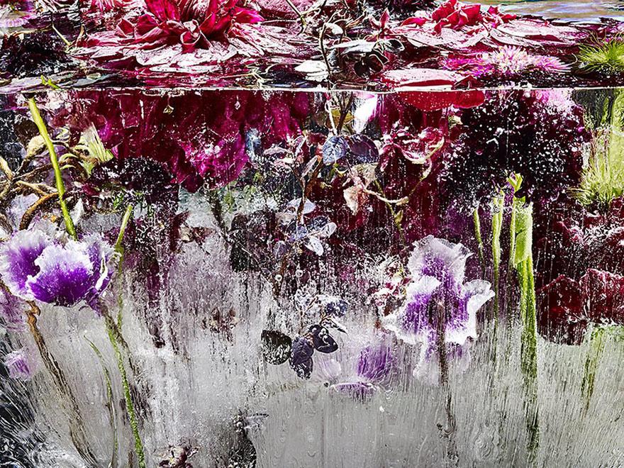 Flowers Frozen In Ice Look Like Beautiful Watercolor Paintings
