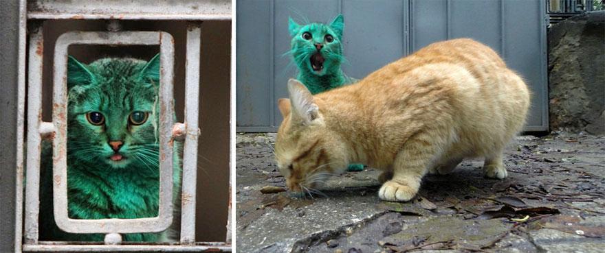 verde-cat-bulgária-6