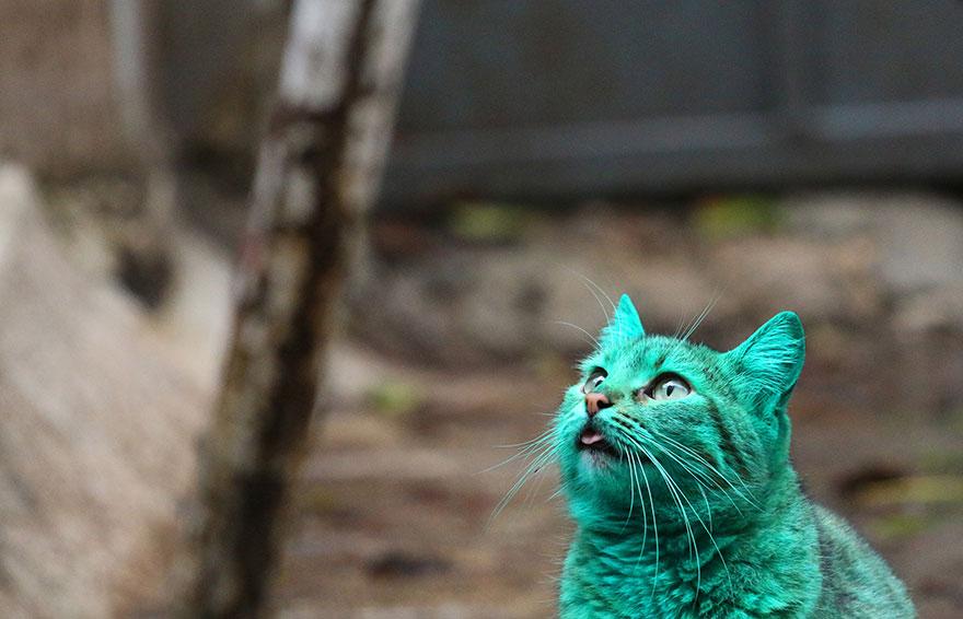 verde-cat-varna-Bulgária-1