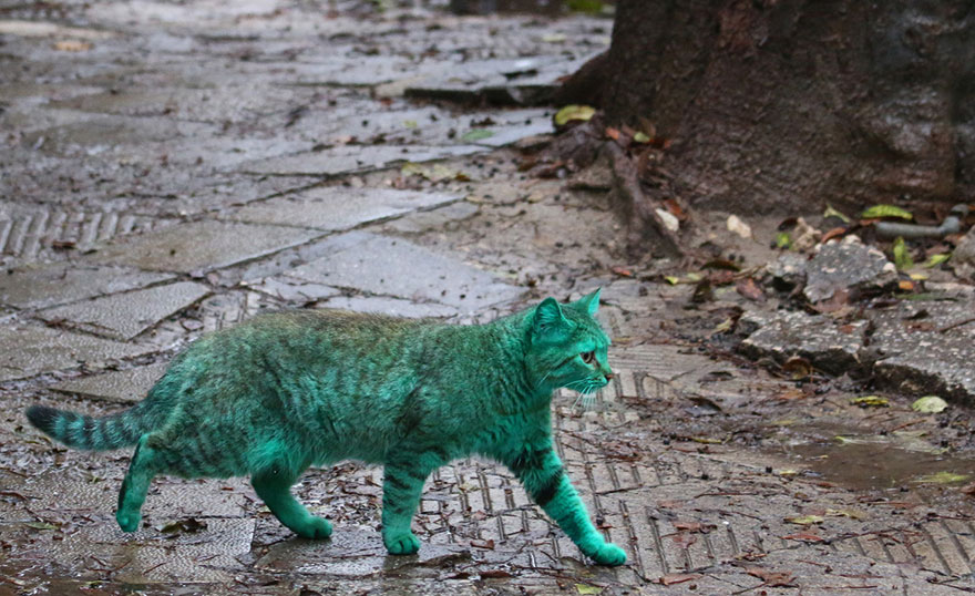 green-cat-varna-bulgaria-10