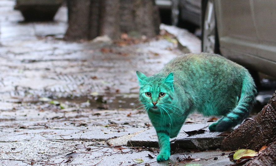 green-cat-varna-bulgaria-9