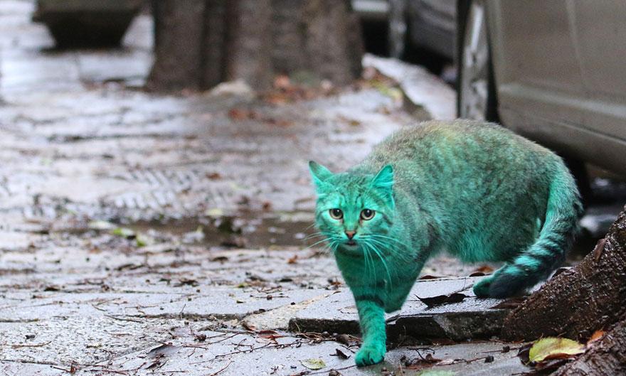 verde-cat-varna-Bulgária-9
