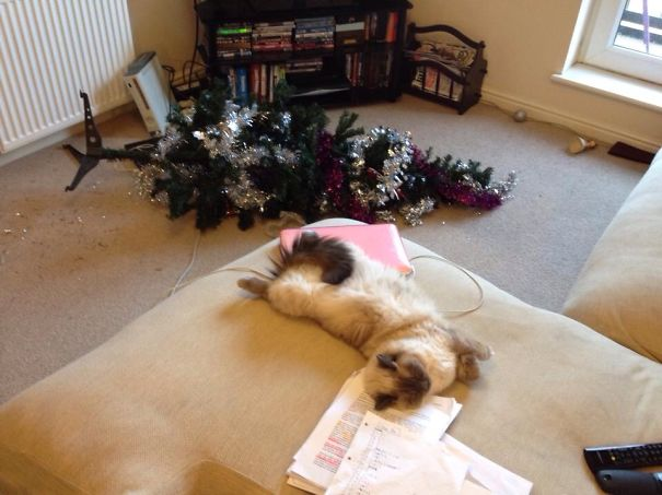 Christmas Tree Destroyed, Time For A Nap
