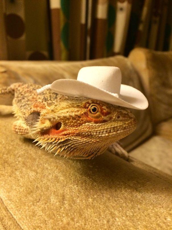 Howdy Ma'am