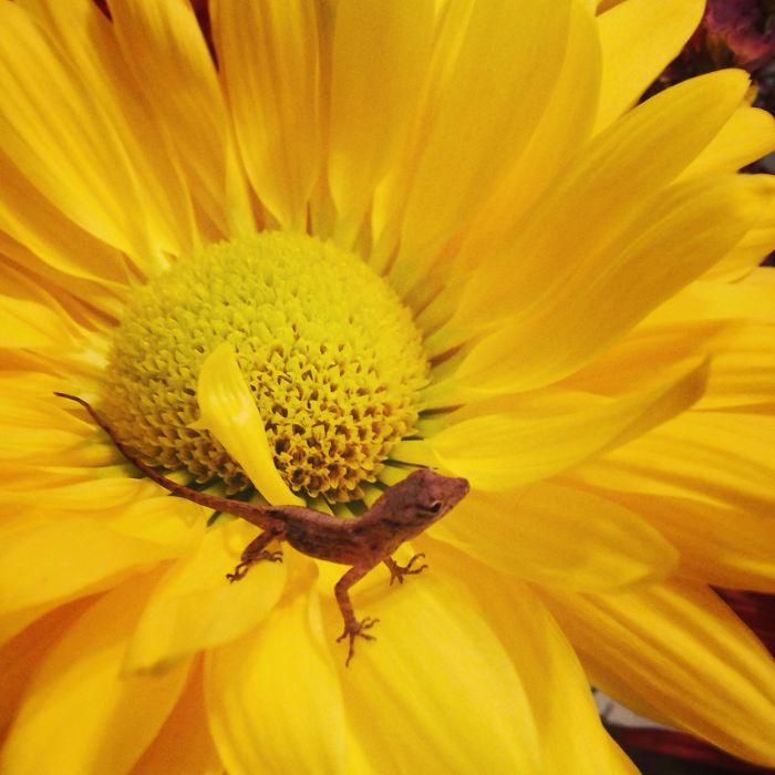 Flower Lizard