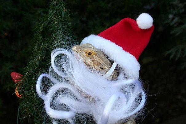 Ho Ho Ho Beardy Christmas!