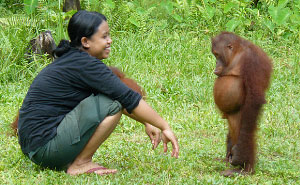 Standoff Between Orangutan And Its Babysitter