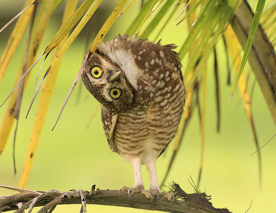 owl - Owl Picture