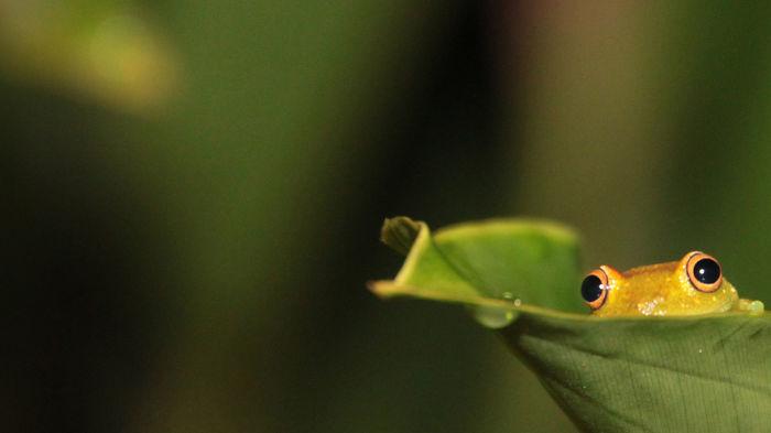 Modest Frog