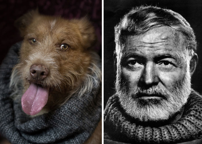 Poetic Dogs: Photo Project Compares Shelter Dogs And Famous Writers' Expressions