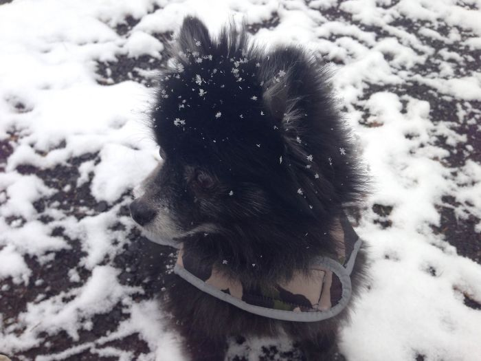 Sonic Sees Snow For The First Time.