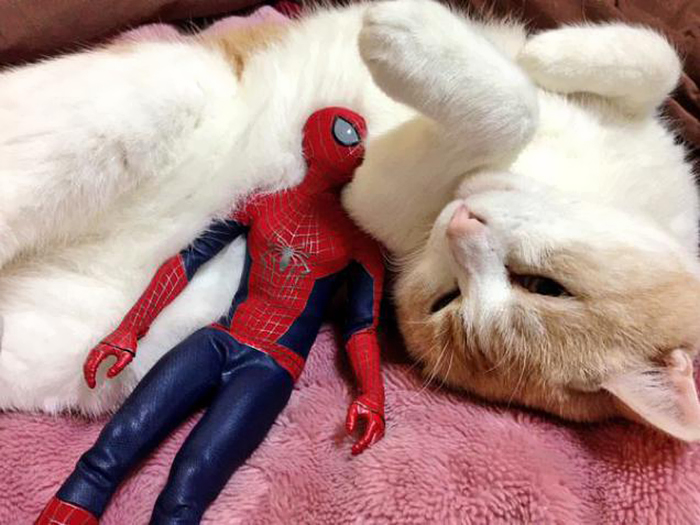 Spider-Man Is Actually A Cat Person