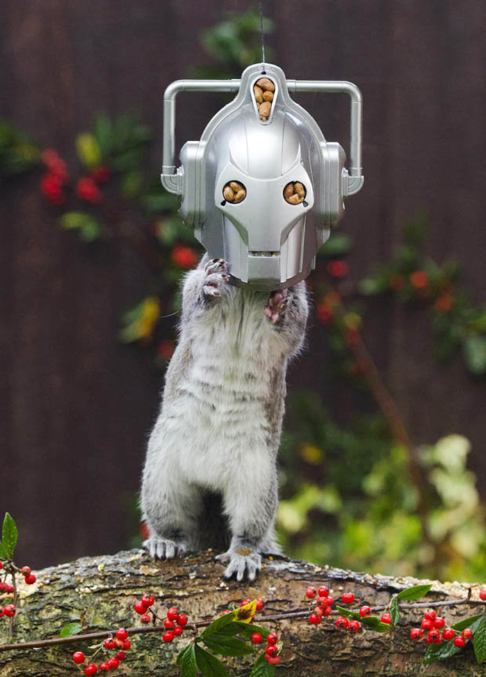 squirrel-doctor-who-feeder-chris balcombe-1