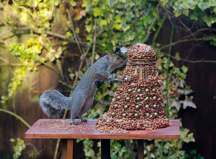 squirrel-doctor-who-feeder-chris balcombe-4