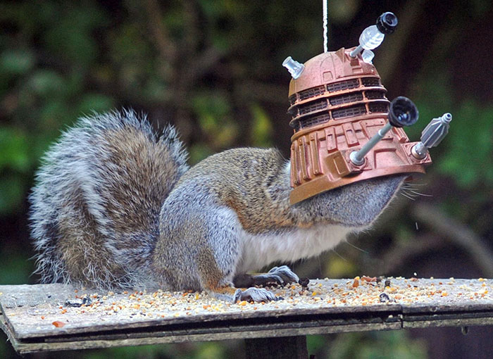 squirrel-doctor-who-feeder-chris balcombe-5