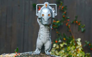 CyberSquirrel: Feeder Turns Squirrel Into Doctor Who's Deadly Enemy