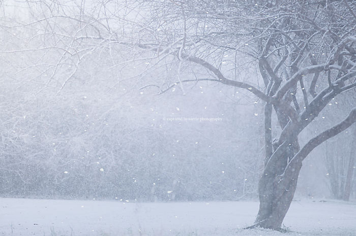 Winter Wonders By Captured By Carrie Photography & Product Shop