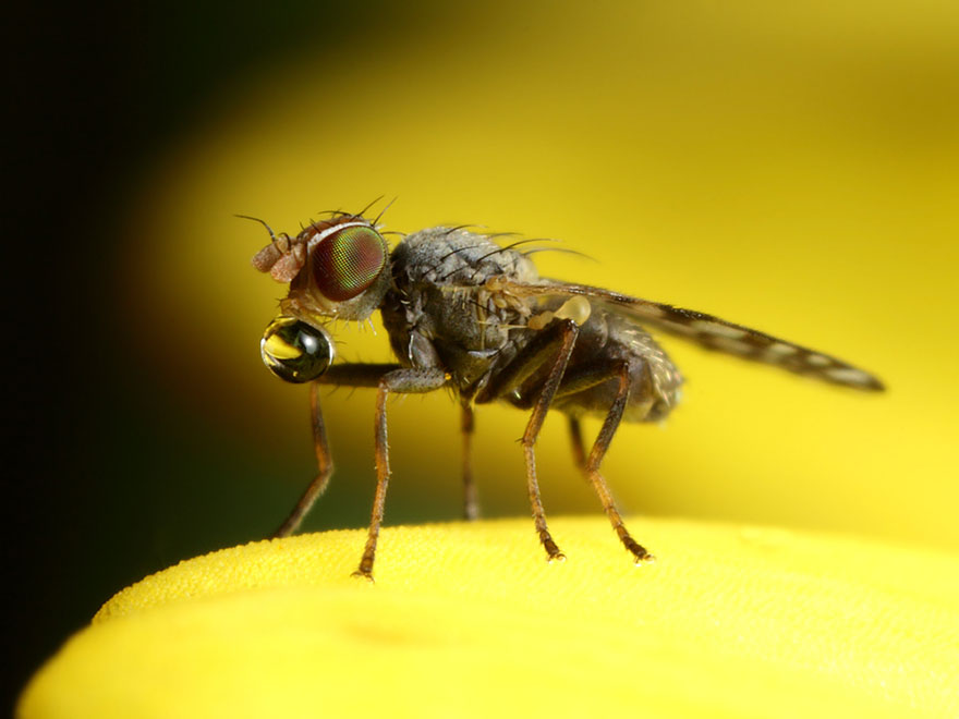 the-smaller-the-better-insect-photography-john-cogan-1