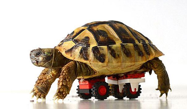 tortoise-lego-wheels-carsten-plischke-1