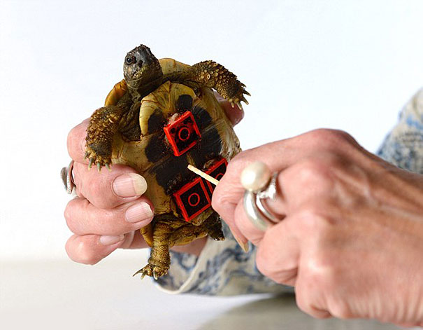 tortoise-lego-wheels-carsten-plischke-3