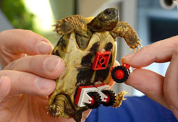 tortoise-lego-wheels-carsten-plischke-4