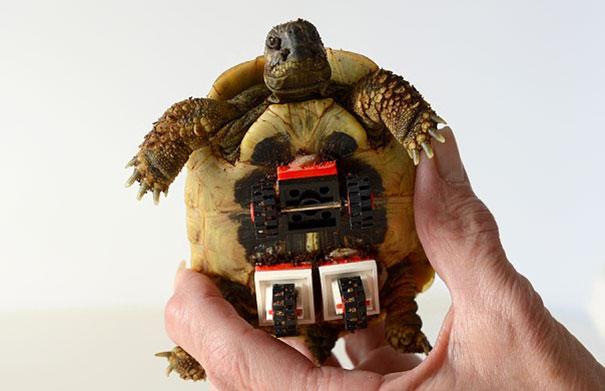 tortoise-lego-wheels-carsten-plischke-5