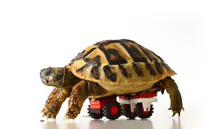 Vet Makes Wheelchair From Son's LEGOs For Disabled Tortoise