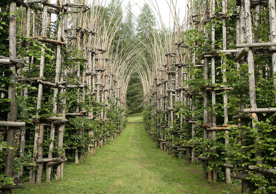 A majestic cathedral made of living breathing trees for Architecture vegetale