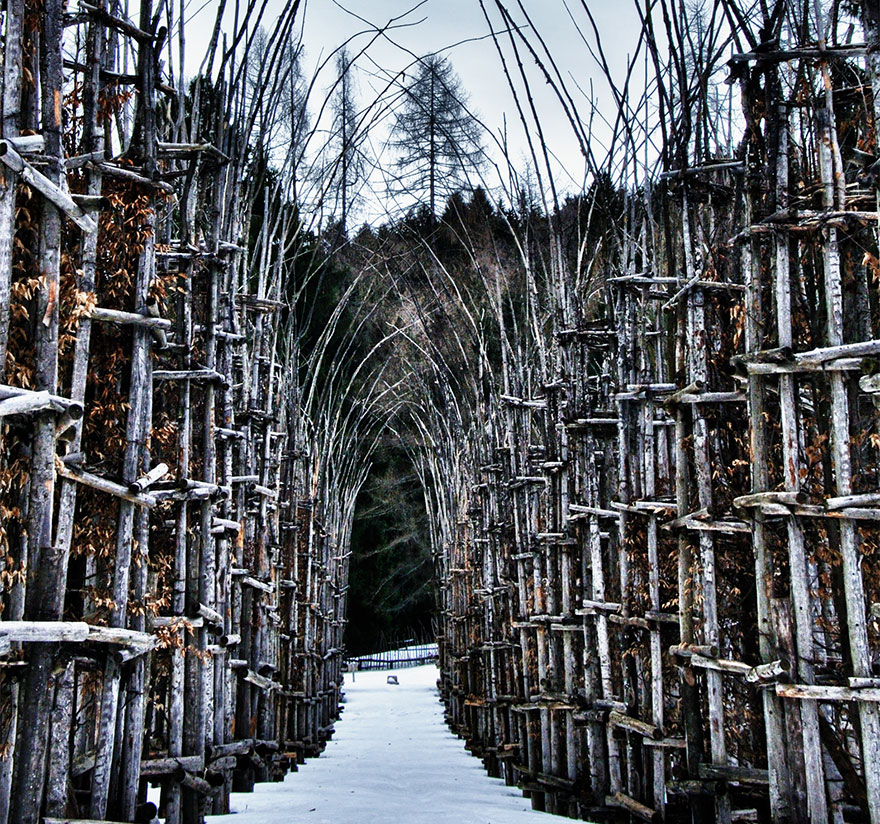tree-cathedral-cattedrale-vegetale-giuliano-mauri-11