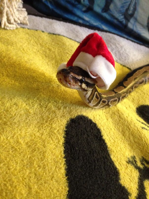 This Snake Is Wishing You A Merry Christmas