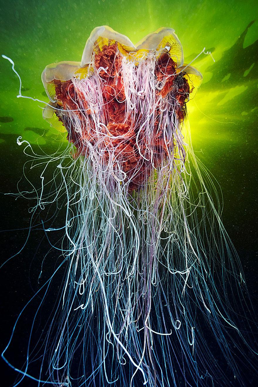underwater-jellyfish-alexander-semenov-aquatis-29